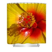 Tropical Treat Shower Curtain
