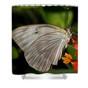 Tropical White Butterfly Shower Curtain by April Wietrecki Green