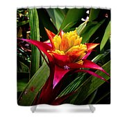 Tropicals Shower Curtain