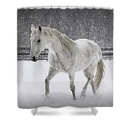 Trot In The Snow Shower Curtain