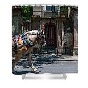 Trotting Into The Past Shower Curtain