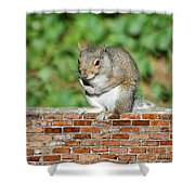 Trouble Brewing Shower Curtain