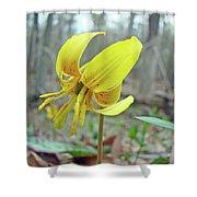 Trout Lily - Erythronium Americanum  Shower Curtain