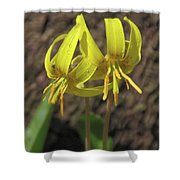 Trout Lily 1068 Shower Curtain