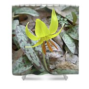 Trout Lily Wildflower - Erythronium Americanum Shower Curtain