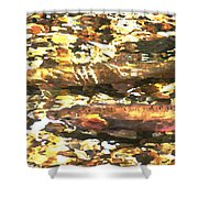 Trout Stream Shower Curtain