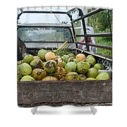 Truckload Of Coconuts Shower Curtain