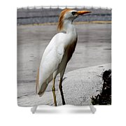 Trump Egret Shower Curtain