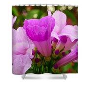 Trumpet Flower 5 Shower Curtain
