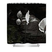 Trumpet Flower Shower Curtain