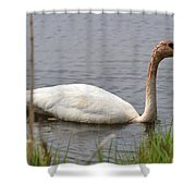 Trumpeter Shower Curtain