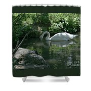 Trumpeter Swan Shower Curtain
