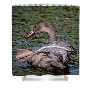Trumpeter Swan Foot Wave Shower Curtain