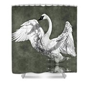 Trumpeter Swan In The Fog Shower Curtain