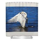 Trumpeter Swan  Shower Curtain