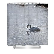 Trumpeter Swan Yellowstone Shower Curtain