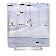 Trumpeters In Flight Shower Curtain