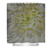 Truth And Loyal Love Shower Curtain