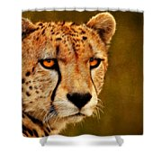 Try Me Shower Curtain
