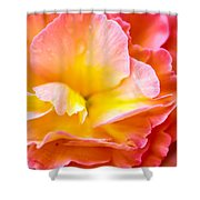 Tuberous Begonia  Shower Curtain