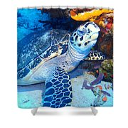 Tucked Away Turtle Shower Curtain