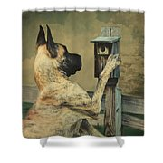Tucker And The Birdhouse Shower Curtain