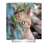 Tucker - The Cat Shower Curtain
