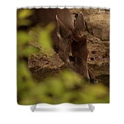 Tufted Deer  Shower Curtain