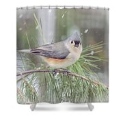 Tufted Titmouse - A Winter Delight Shower Curtain