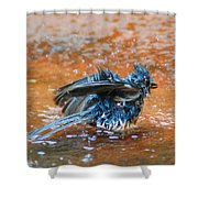 Tufted Titmouse Bath Shower Curtain