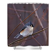 Tufted Titmouse In Winter Shower Curtain