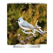 Tufted Titmouse On A Branch Shower Curtain
