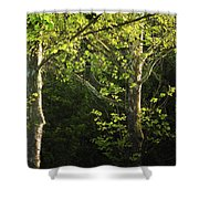 Branches Of Lovely Light Shower Curtain