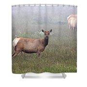 Tule Elk In Fog Shower Curtain