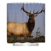 Tule Elk - Tomales Point Shower Curtain