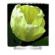 Tulip 0755 Shower Curtain