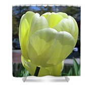 Tulip 0761 Shower Curtain
