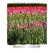 Tulip-1 Shower Curtain