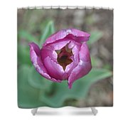 Tulip 1 Shower Curtain