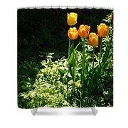 Tulip #1 Shower Curtain