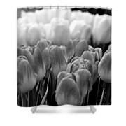 Tulip 33 Shower Curtain