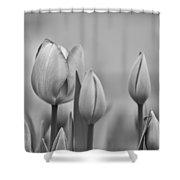 Tulip 37 Shower Curtain