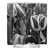 Tulip 41 Shower Curtain