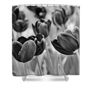 Tulip 84 Shower Curtain