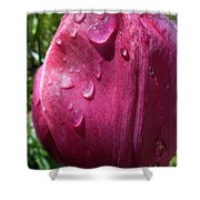 Tulip After The Rain Shower Curtain