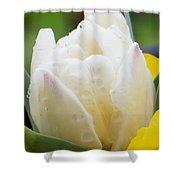 Tulip Among Pansies 2 Shower Curtain