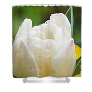 Tulip Among Pansies Shower Curtain