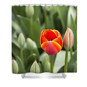 Tulip And Child Shower Curtain