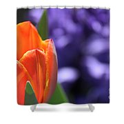 Tulip And Hyacinth Shower Curtain