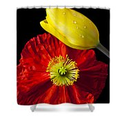Tulip And Iceland Poppy Shower Curtain